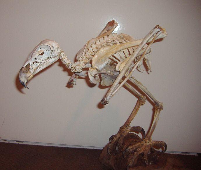 Eagle skeleton tattoo