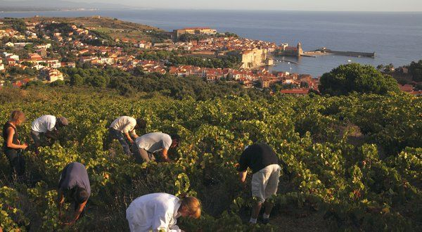 Roussillon - New Frontier in French Winemaking - NYTimes.com