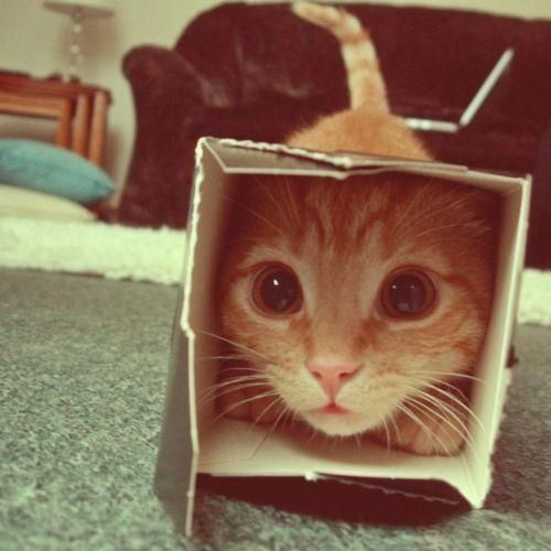 kittayy