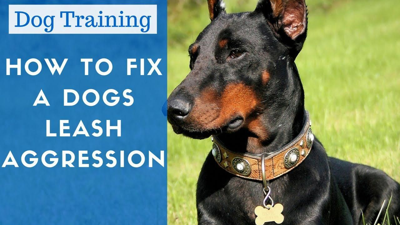 How To Stop Dog Aggression (With images) Dog training