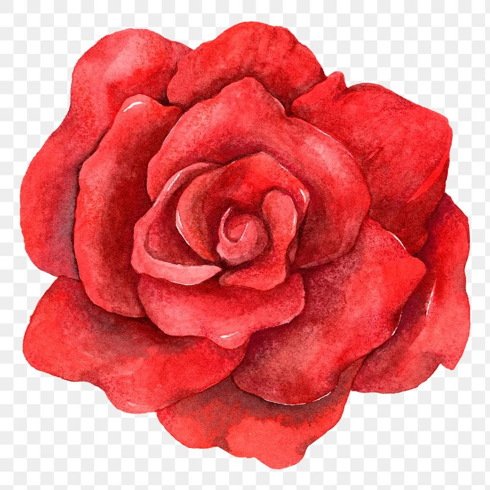 Free Clipart Of A red rose