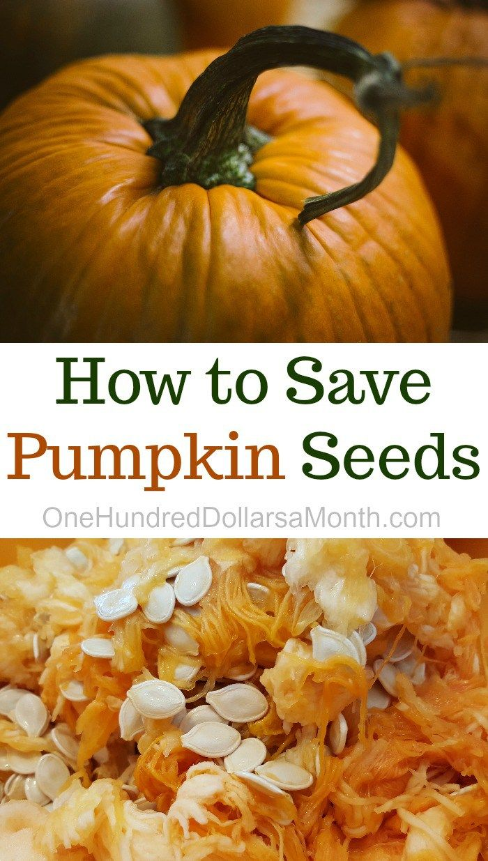 How To Save Pumpkin Seeds With Images Planting Pumpkin Seeds