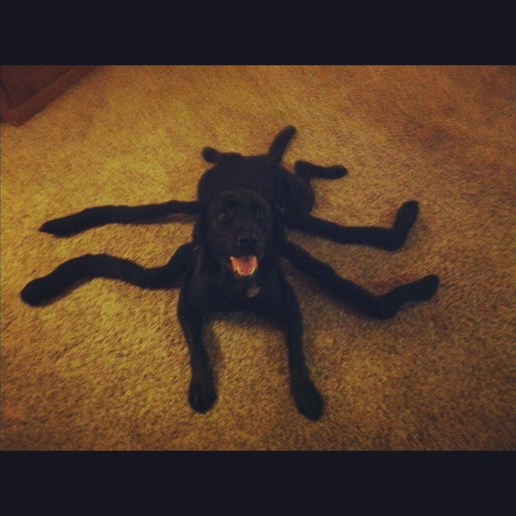 Black Widow Lab Shay O Donnell Obrock Finn S Halloween Costume
