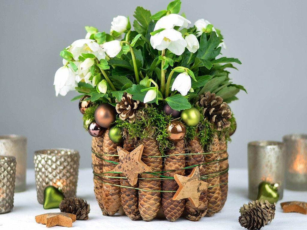 Tischdeko für Weihnachten: Christrose mit Fichtenzapfen & Moos gestalten