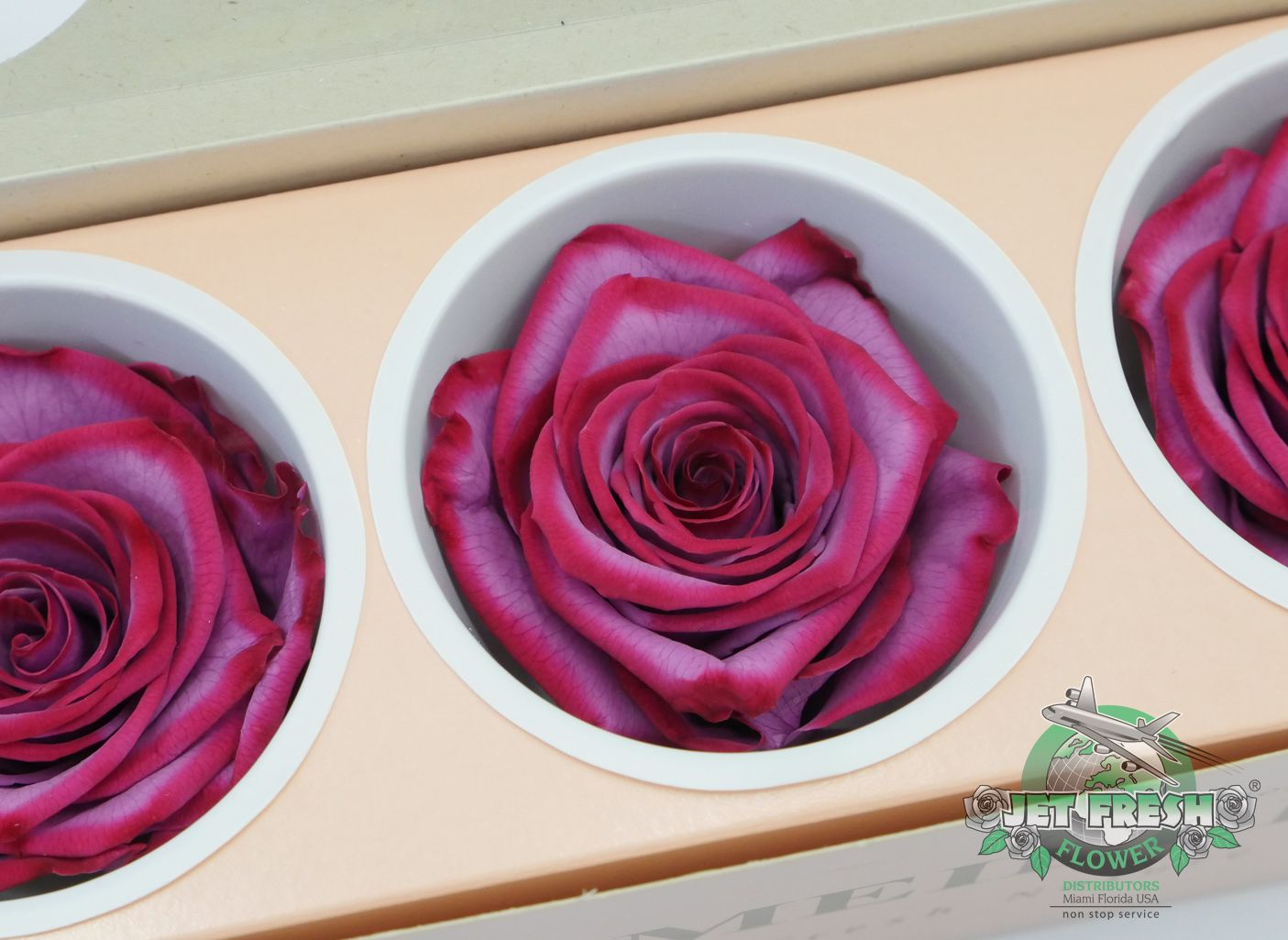 Lilac Burgundy Bi Colored Preserved Roses Available At Jet Fresh Flowers Learn More About Our Diffe Sizes Here