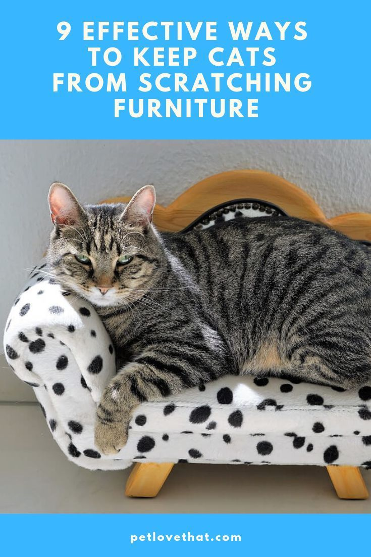 9 effective ways to keep cats from scratching furniture