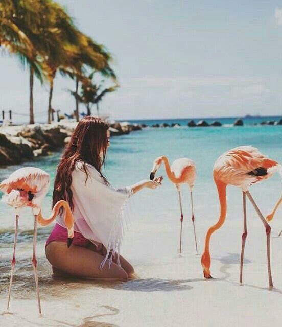de roze flamingo dating datování salvador Brazílie