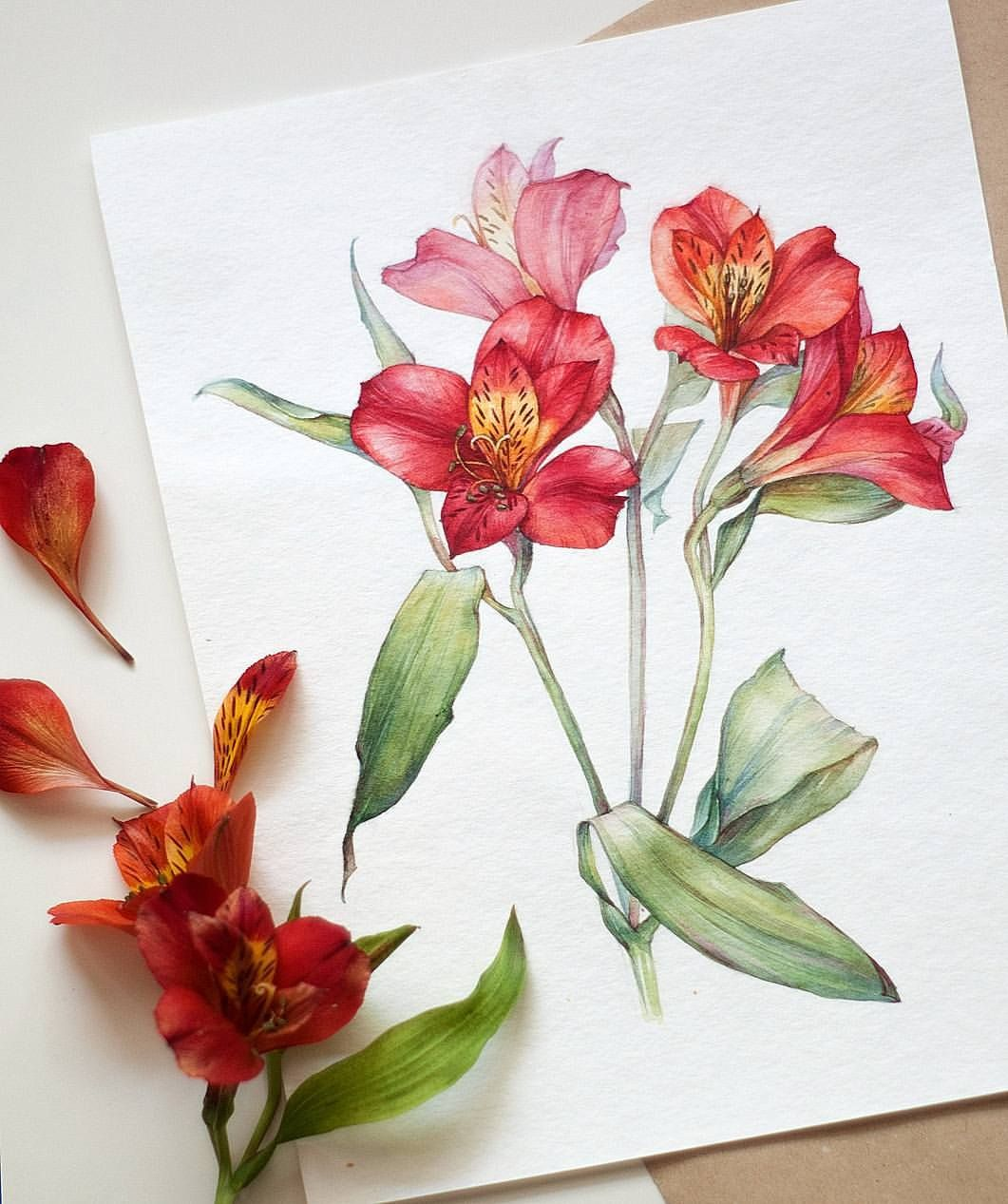 Angelina Gradil Lina Gradil Astromelias Flower Drawing