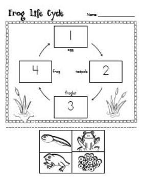 Frog Life Cycle Unit   Pinterest   Frösche, Lernen und Schule