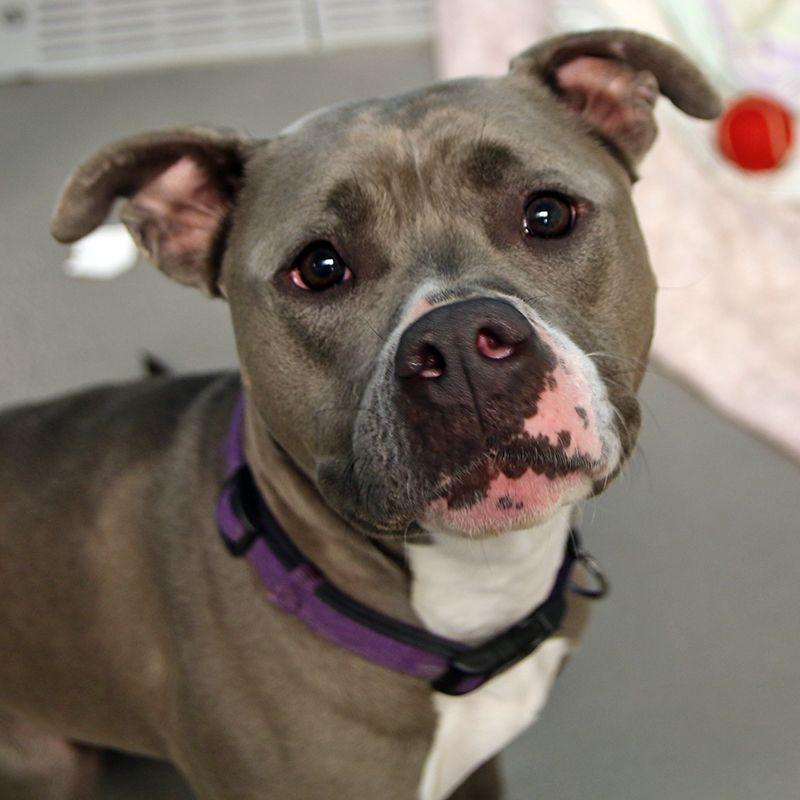Lilly Spca Of Texas Dallas Dog Adoption Spca Shelter Dogs