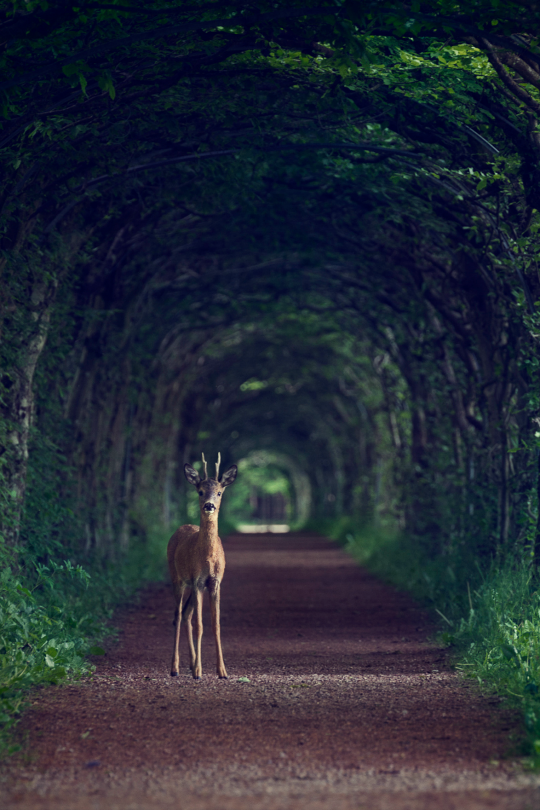 """In The Forest Archway."""