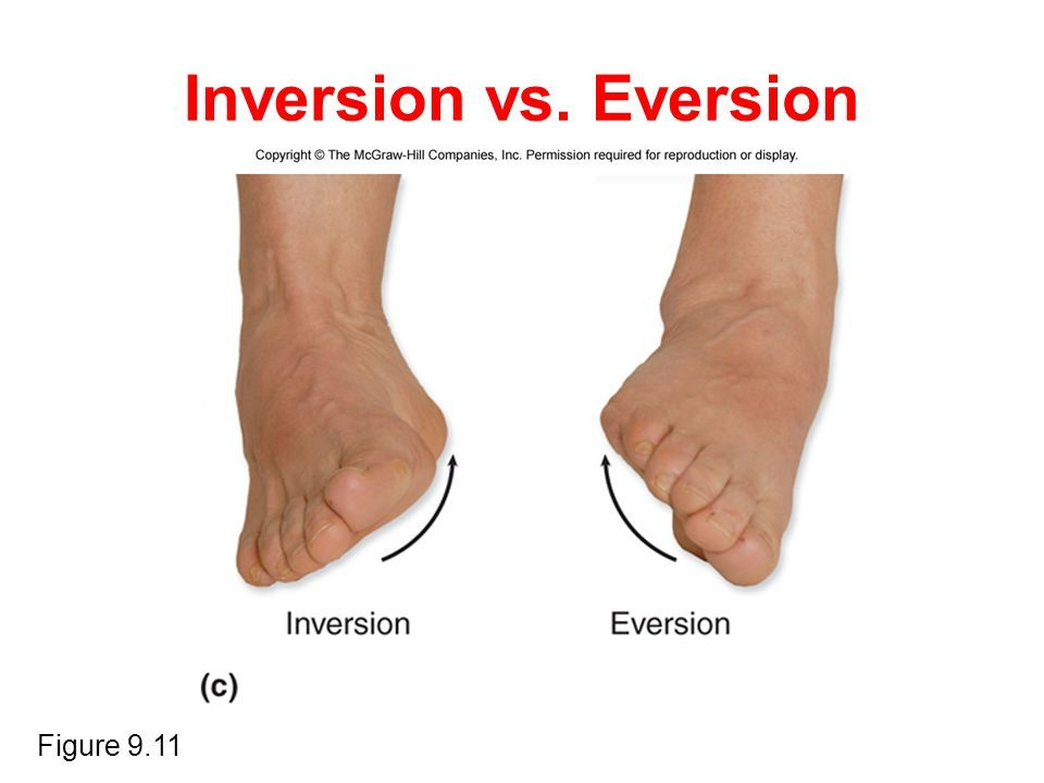 Resultado de imagen de inversion eversion | Localización de ...