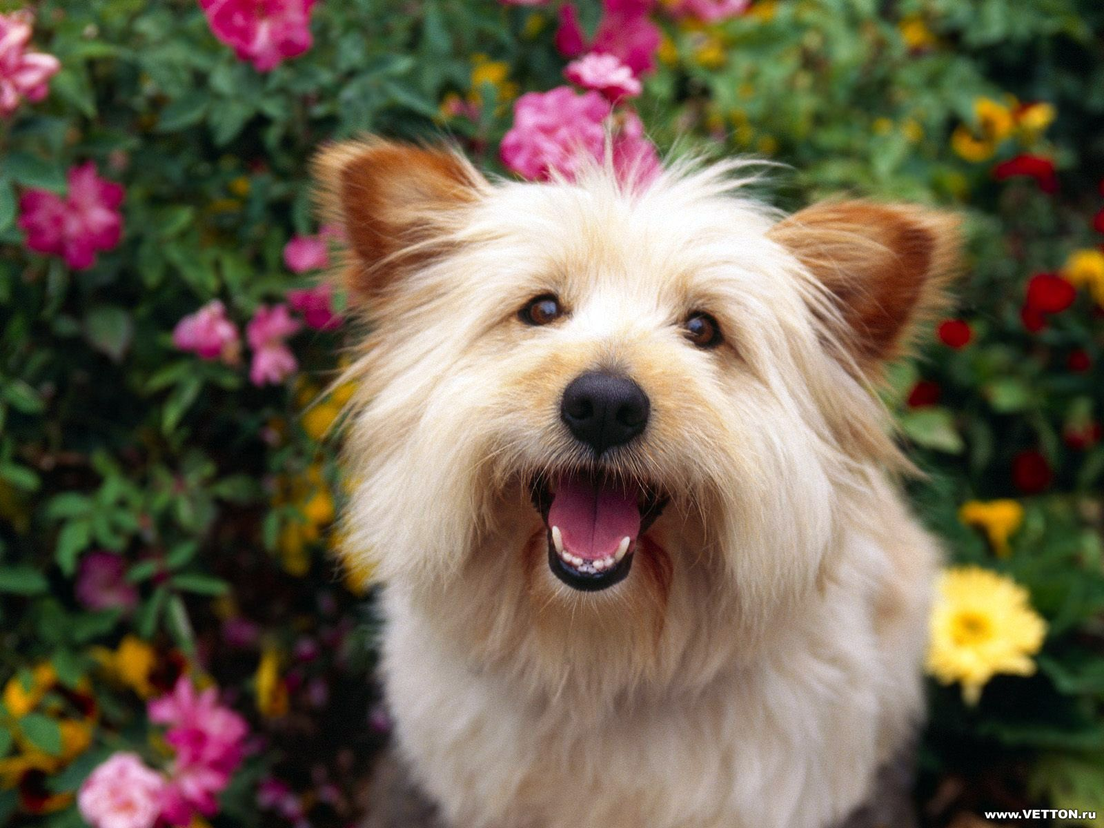 Best cute images free download hd wallpapers pinterest dog