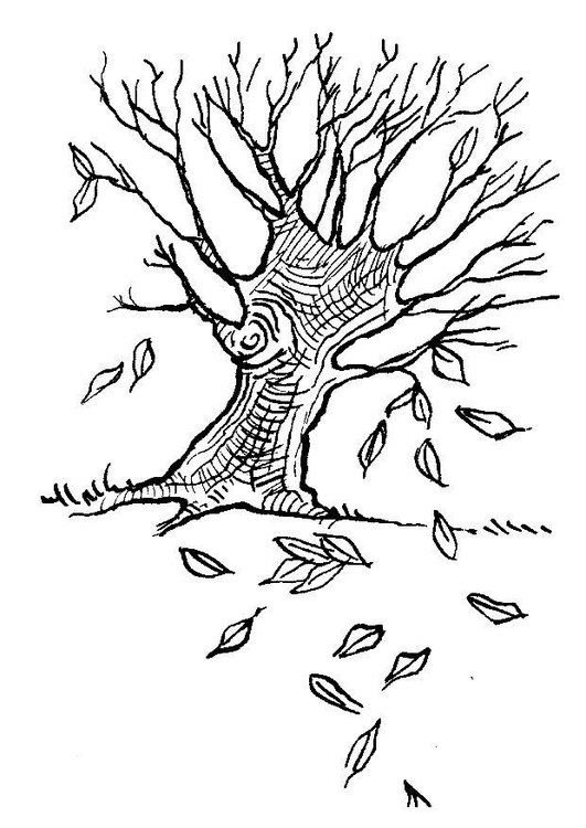 Kleurplaat Boom In Herfst Bild Baum Malvorlagen Herbst Blatter
