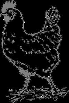 tegning høne