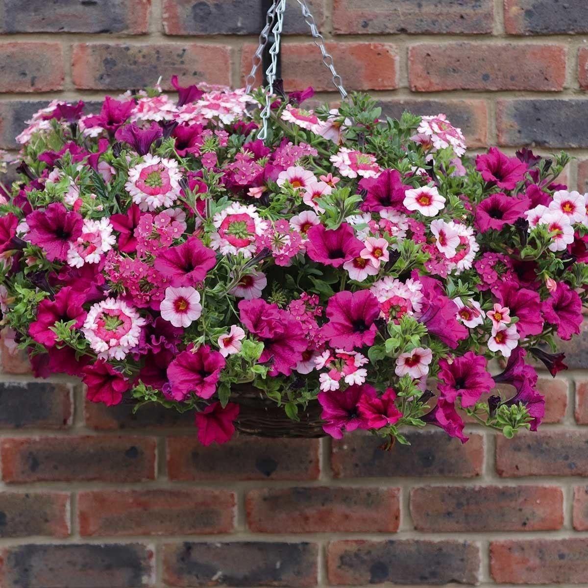 Pin Auf Blumen Hange Ampel