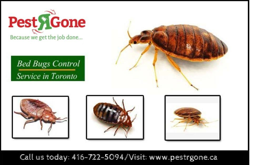 To provide effective bedbug inspection & extermination