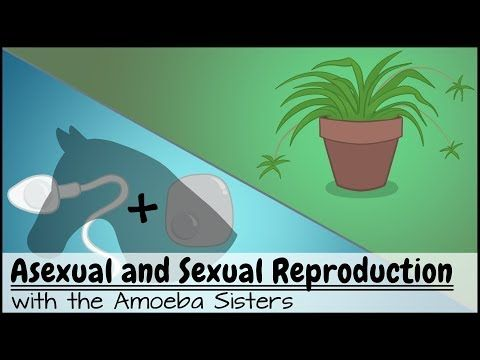 Asexual reproduction quizlet psychology