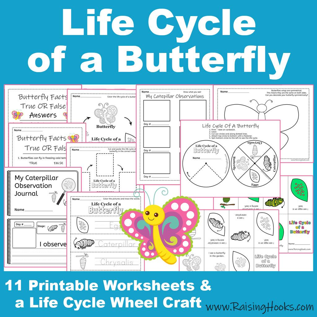 Predownload: Life Cycle Of A Butterfly Free Printable Pack Butterfly Facts Butterflies Activities Life Cycles [ 1024 x 1024 Pixel ]