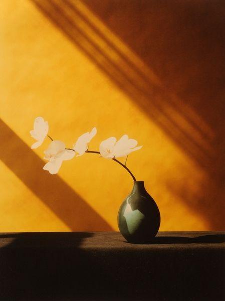 Robert Mapplethorpe - Orchid, 1982