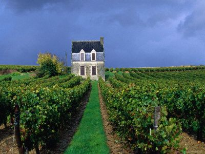 House In A Vineyard Loire Valley Chinon Centre France Photographic Print Oliver Strewe Art Com Loire Valley Travel Loire Valley Loire Valley Wine