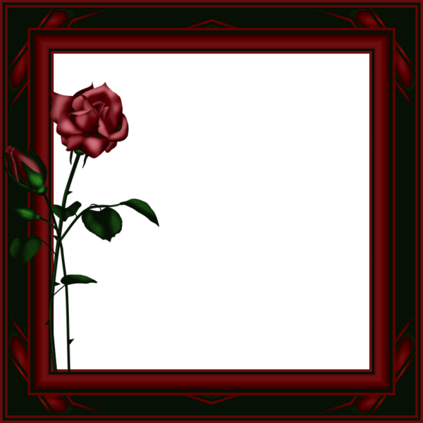 Dark Red Transparent PNG Photo Frame with Roses