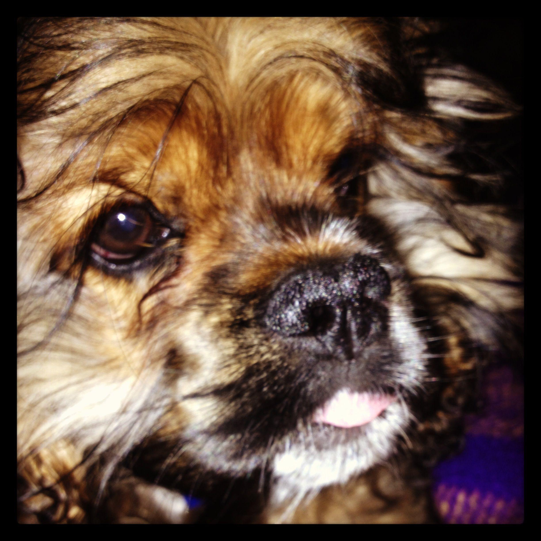 I love my puppy!!