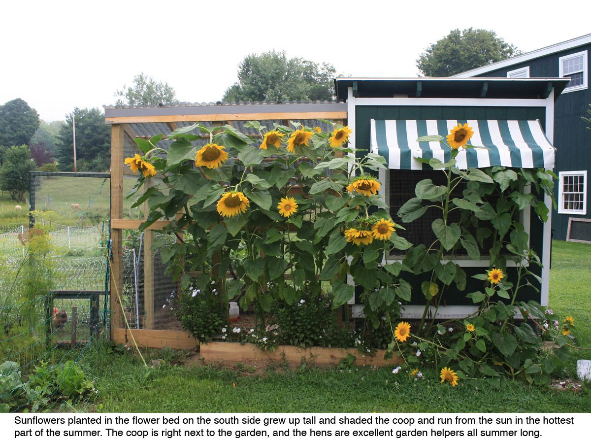 Landscaping Around A Chicken Coop Please Post Your Pics Of - Chicken co op with flowers