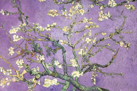 Purple Almond Blossoms Poster