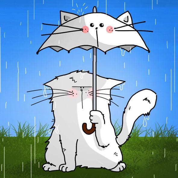 chat et parapluie / cat and umbrella