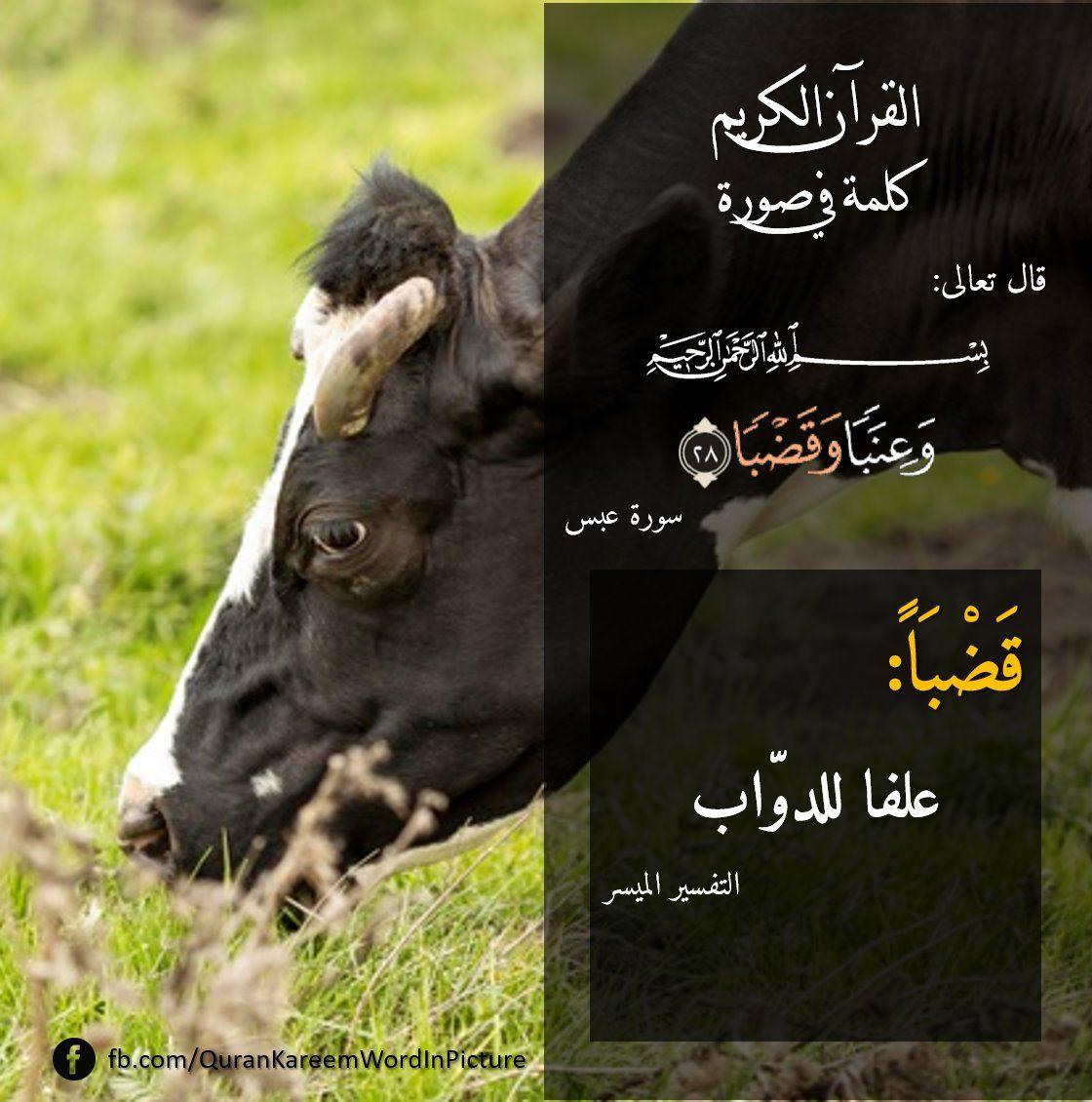 Pin By Essam Sayed Mohamed On كلمة فى صورة Quran Tafseer Quran Holy Quran