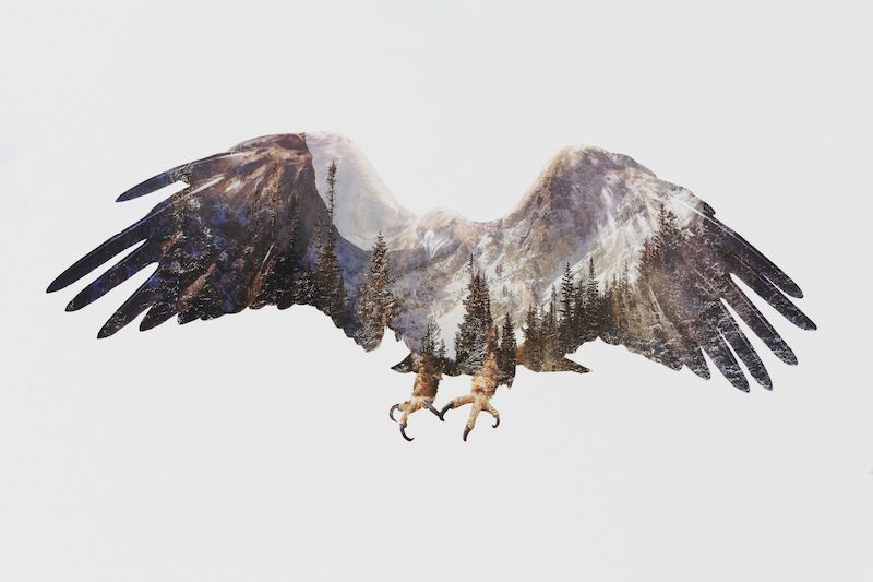 Arctic Eagle, by Andreas Lie | My Modern Shop