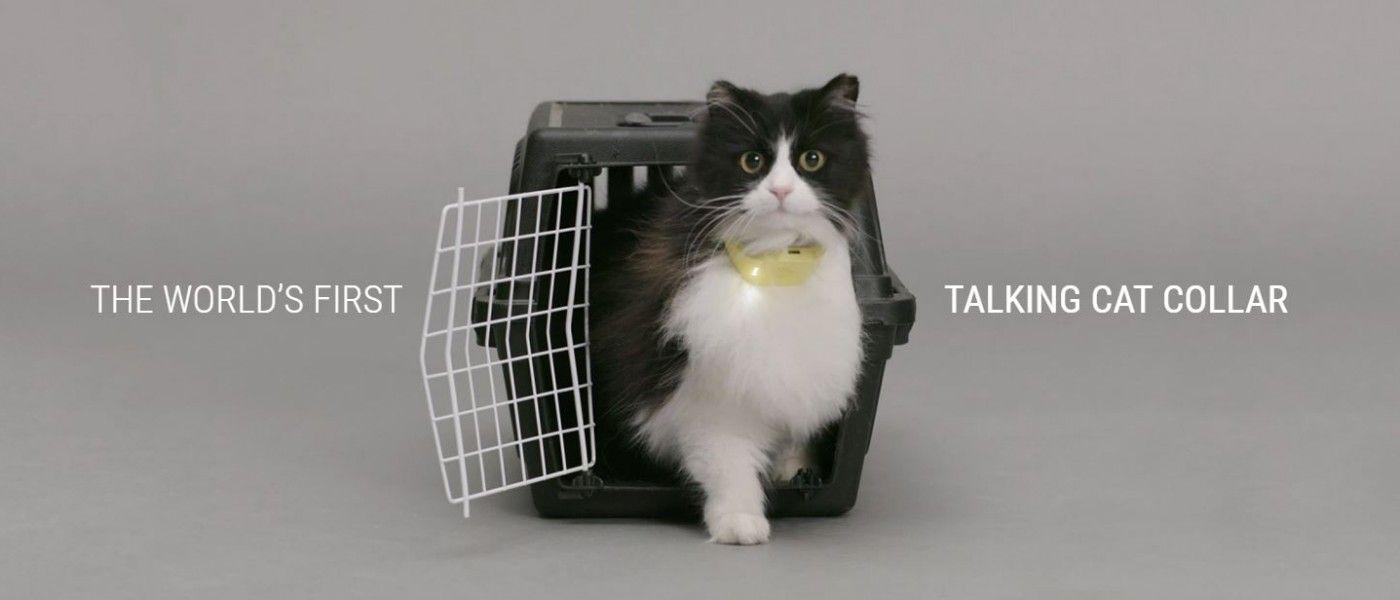Deze halsband zet gemiauw van je kat om in mensentaal - Spotting the Cool