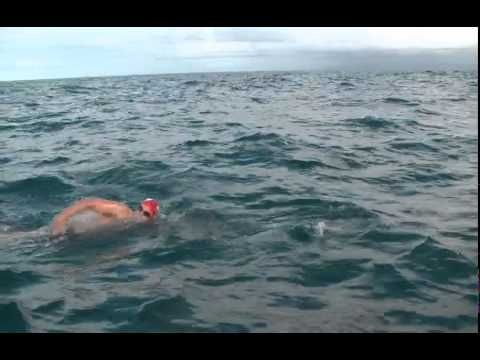 Swimming with Dolphins, Adam Walker - Cook Strait..Come on Japan stop the slaughter of these intelligent creatures