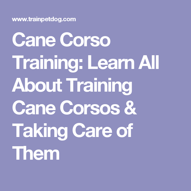 Cane Corso Training Learn All About Training Cane Corsos Taking