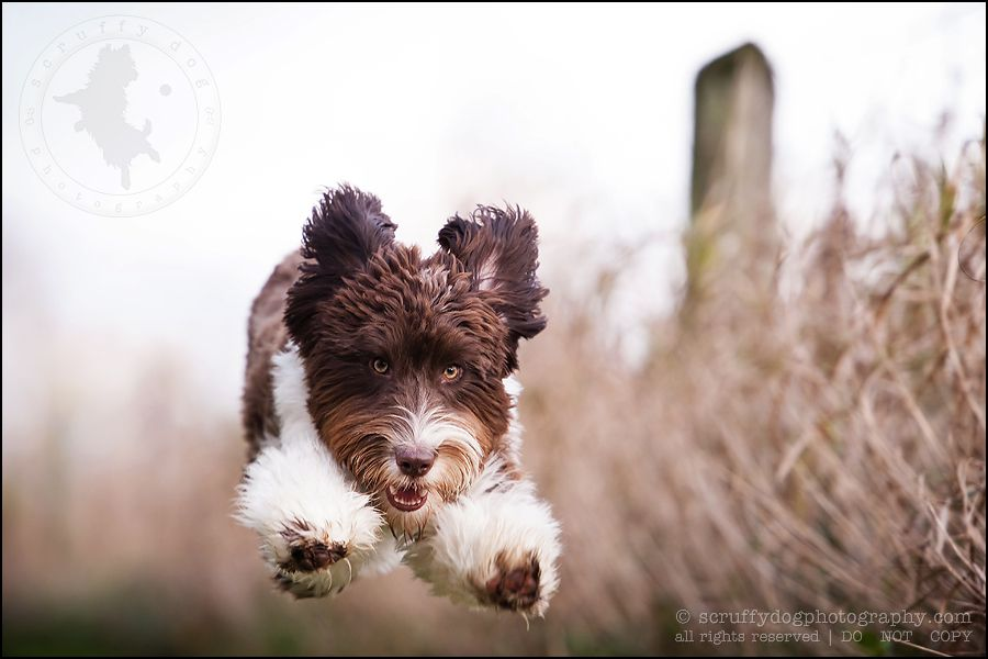 more dogs » scruffy dog photography | best professional pet photographer blog serving Toronto and Ontario
