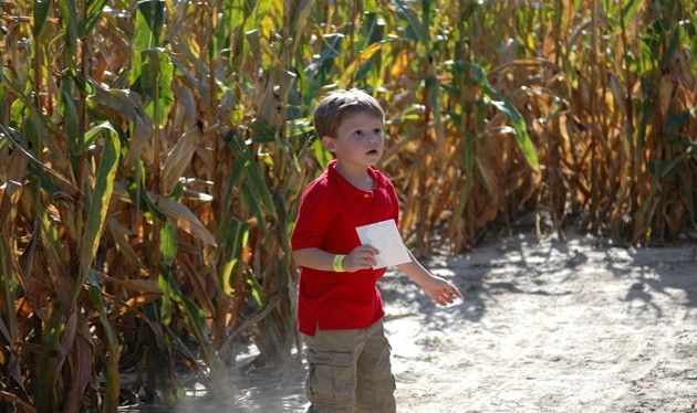 Pin By Sahl S Father Son Farm On Father Son Farm Corn Maze Pig Races Father And Son