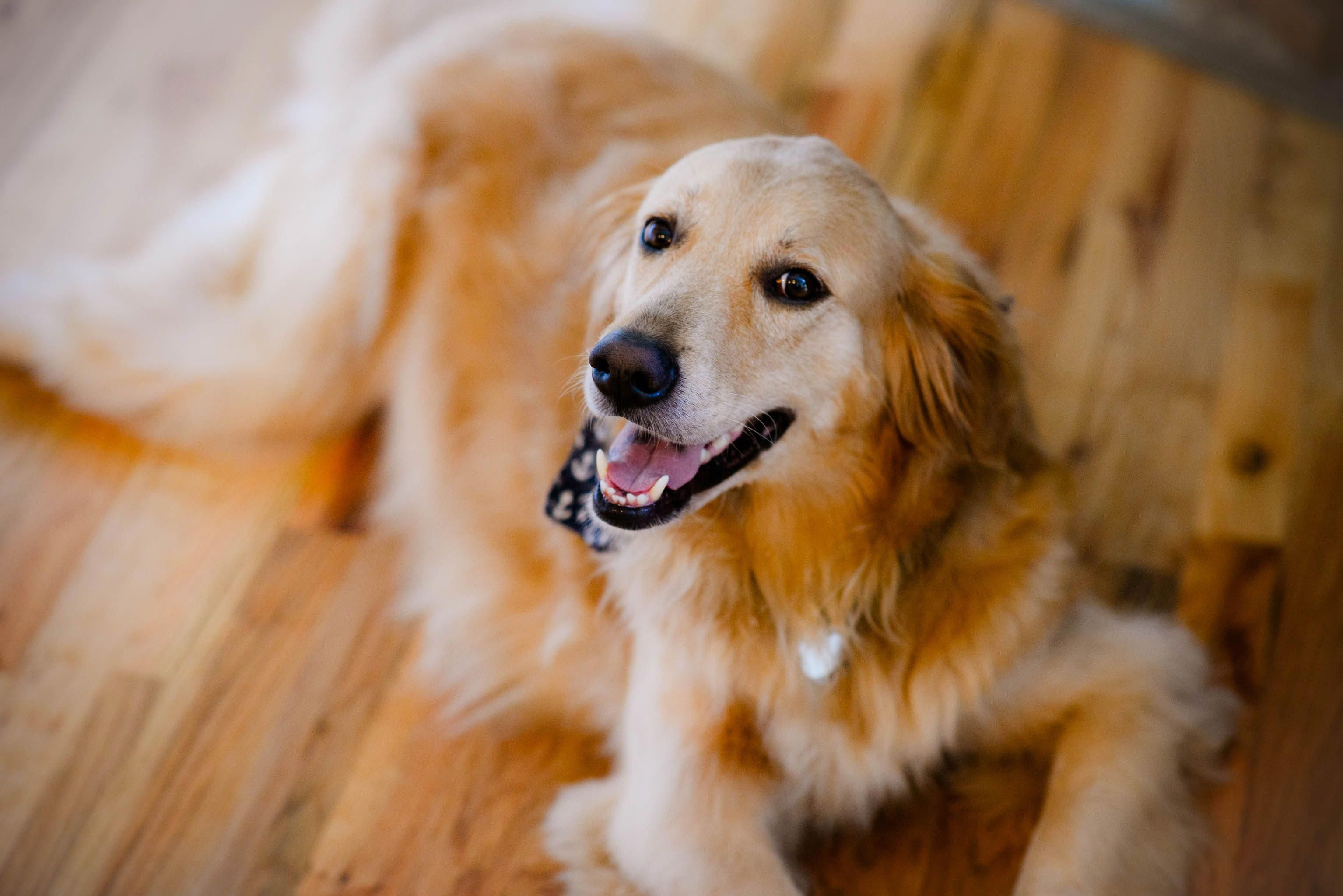 Dog Kennel Under Counter Dogkennelundercounter Golden Retriever