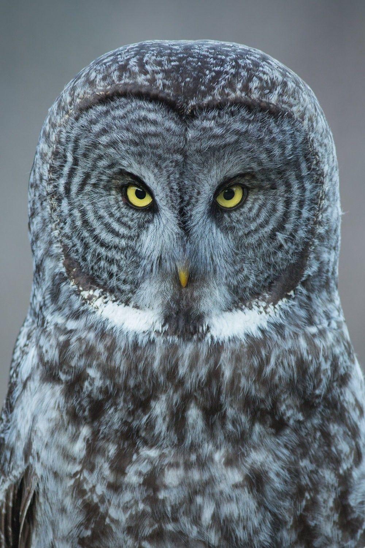 Pin by Naughty Kitten on tattoo | Owl photography, Owl ...