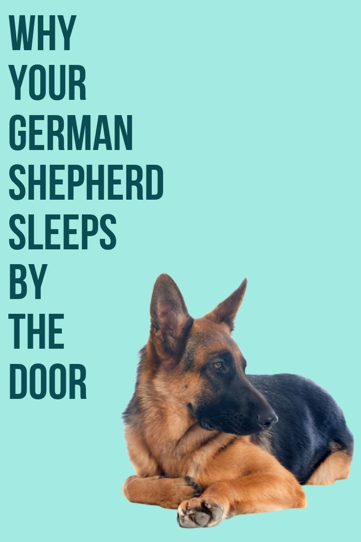 This Post Will Show You Why Your German Shepherd Sleeps By The