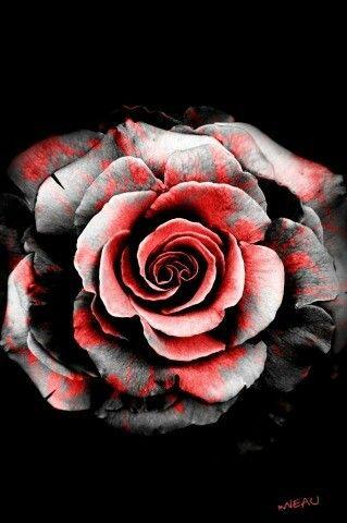 Black White Red Rose Tattoos Pinterest Rose Tattoos