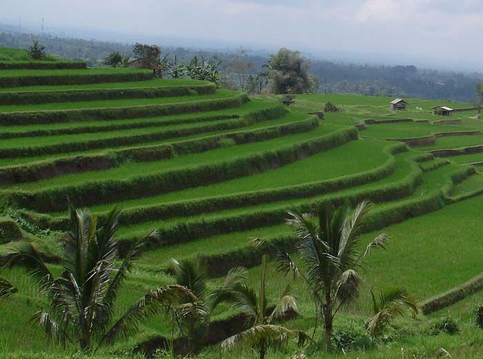 Greener Bali