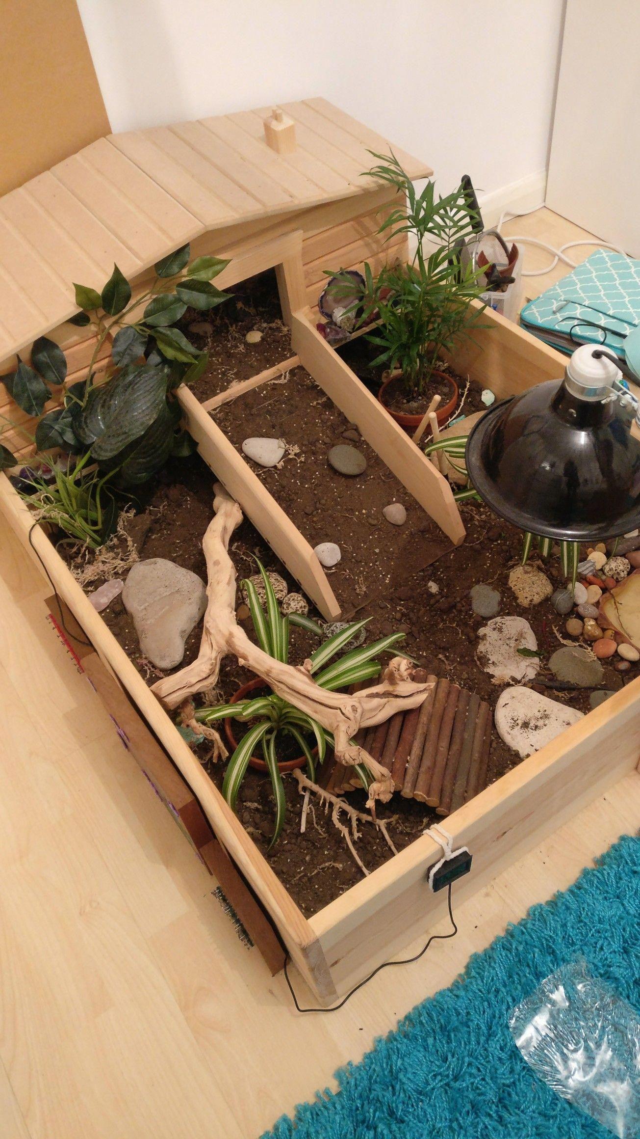 Updated tortoise table Tortoise table, Tortoise habitat