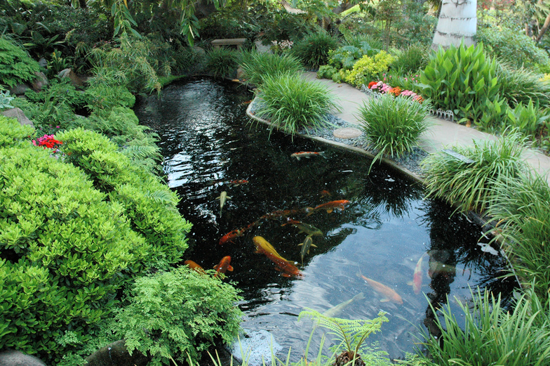 If Your Otherwise Pristine Koi Pond Suddenly Develops The Appearance Of A Green Shag Carpeting You Are Witnessing The Affect Koi Pond Pond Waterfall Pool Sand
