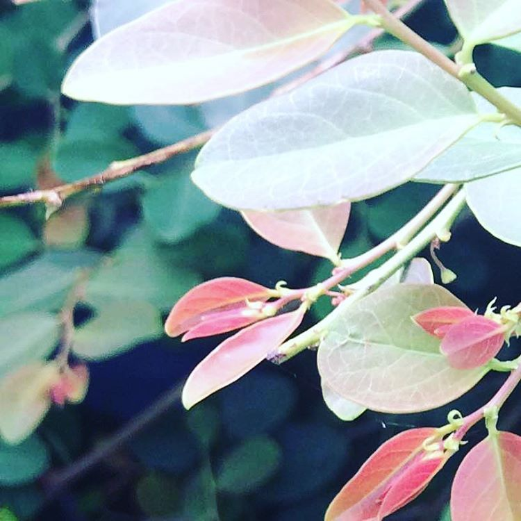 #nature #green #red #leaves #cool #weather #pure #air #antaragange #hills