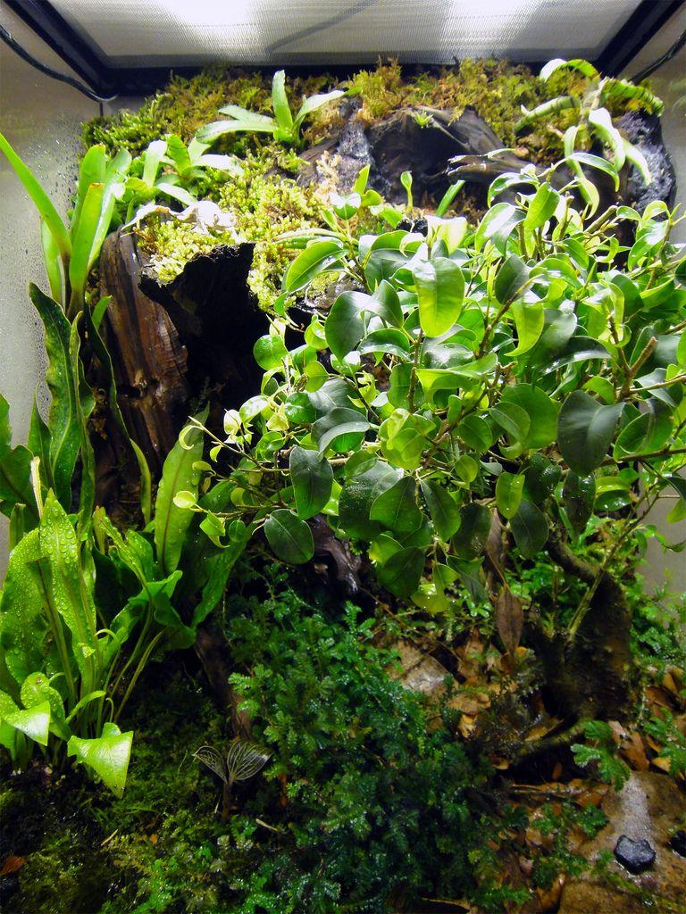 green tree frog care kit