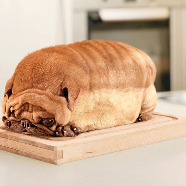 Is That A Loaf Of Bread Made To Look Like A Dog Or A Dog Made To