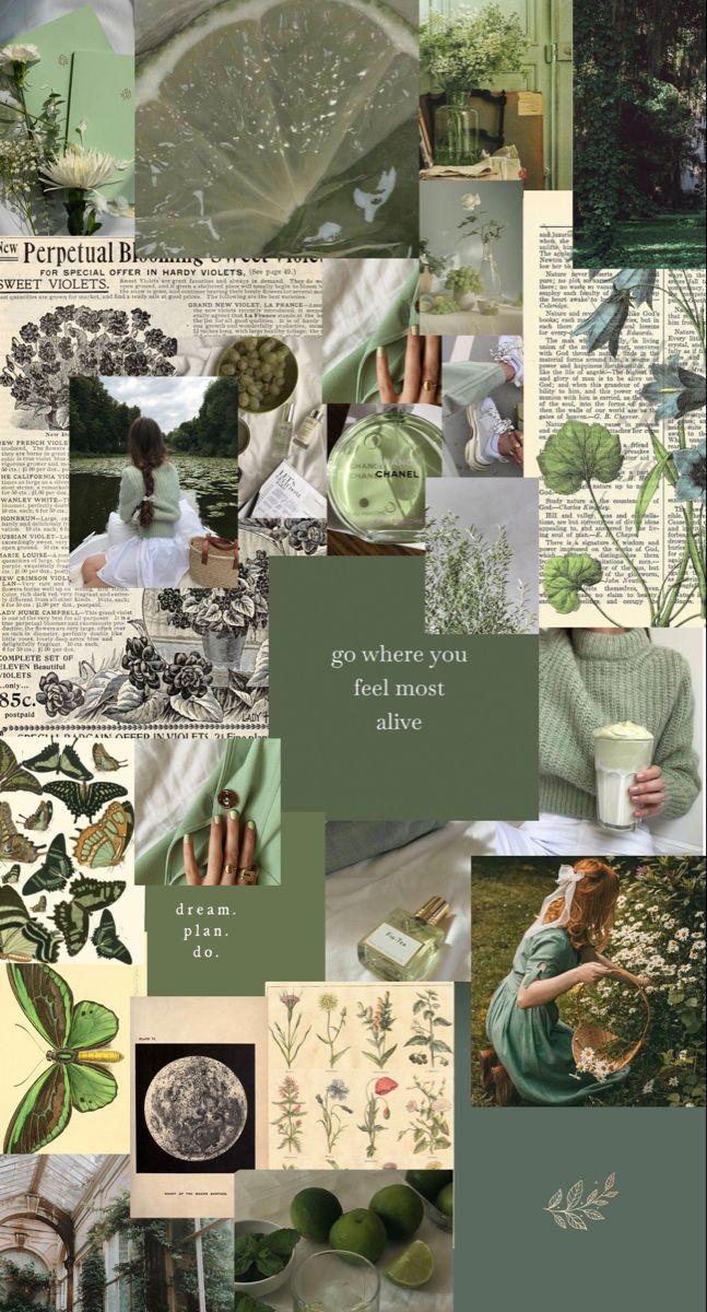 sage green aesthetic🌿