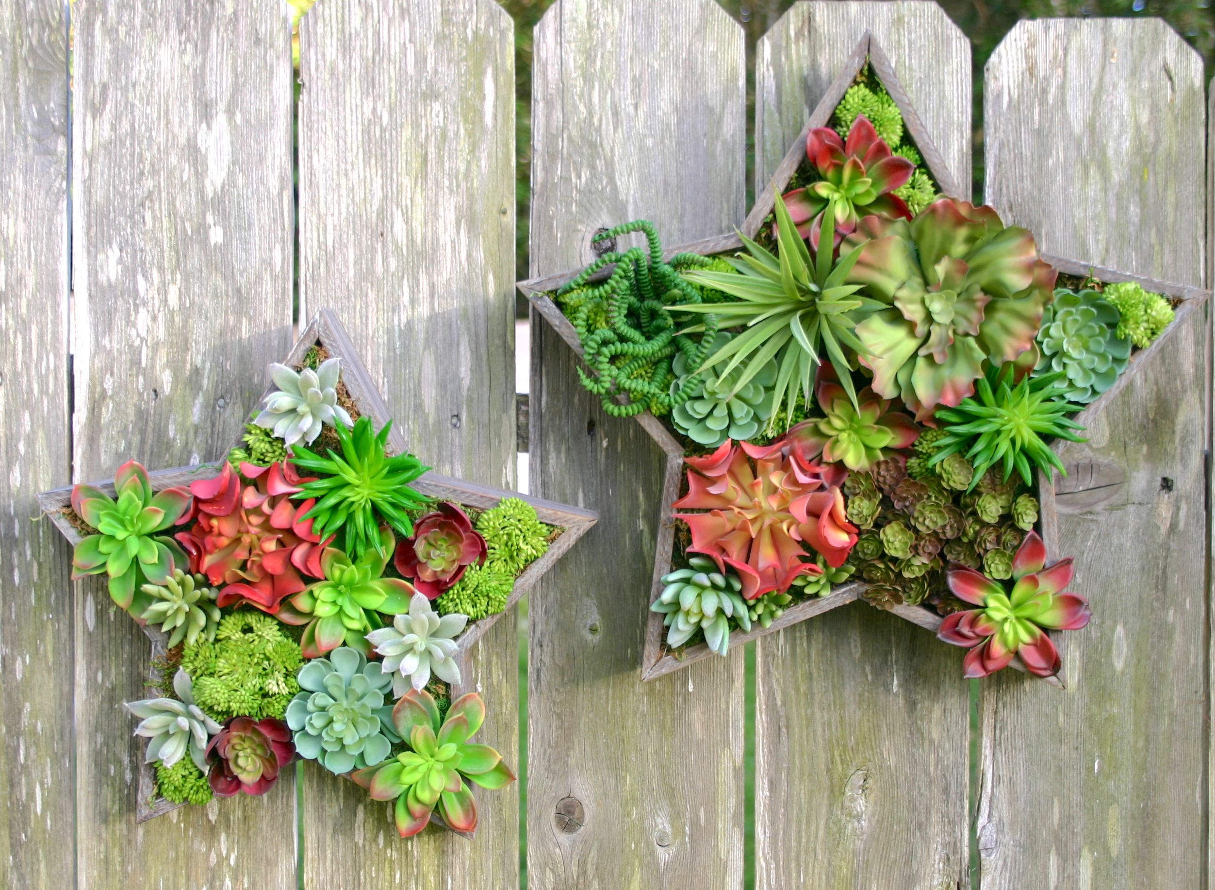 Faux Succulent Wall Hangings In Star Boxes  Hanging Garden