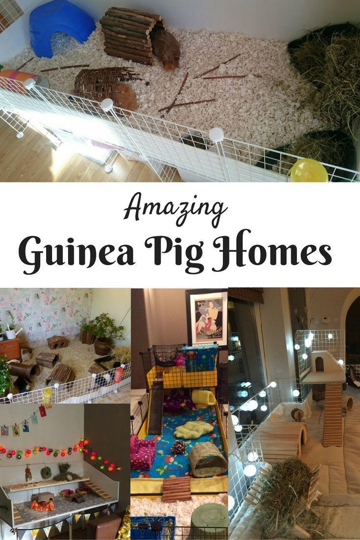 Amazing Guinea Pig Homes